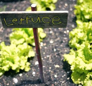 Lettuce Make Garden Markers!