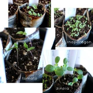 Baby Plants, Baby!