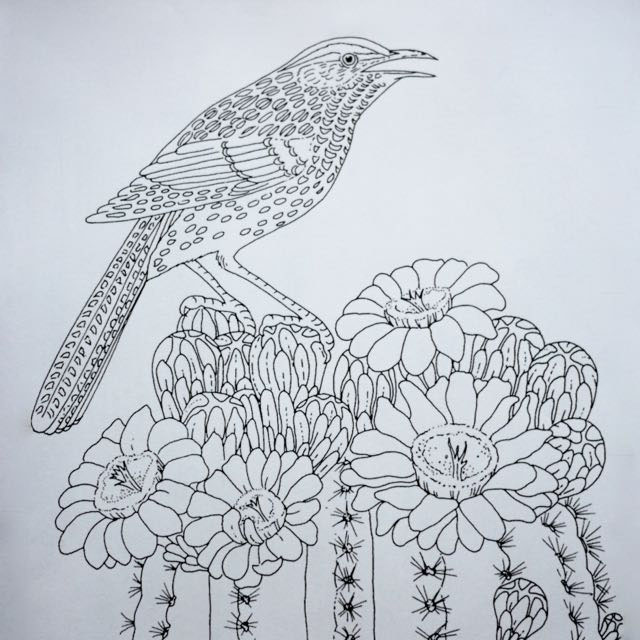 Cactus Wren on a Saguaro from Supercoloring